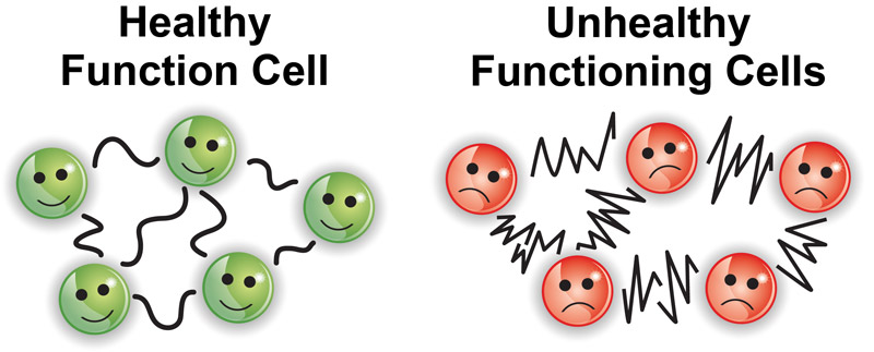 Healthy Cell / Unhealthy Cells